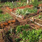 Horta das Corujas: trazer o campo para a metrópole