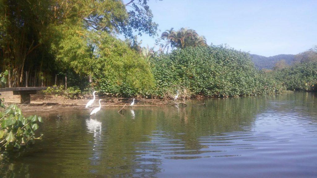 Imagem do rio Tavares sem lixo, com aves e água cristalina